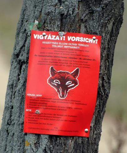 Rókák veszettség elleni immunizálása miatt ebzárlat és legeltetési tilalom elrendelése