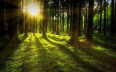 Erdőterv meghatározása